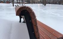 Mưa băng 'đông cứng' một bang Canada