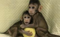 Trung Quốc đã nhân bản vô tính khỉ, người chỉ còn là thời gian