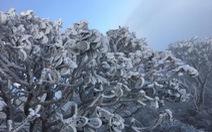 Mưa tuyết phủ trắng Sa Pa