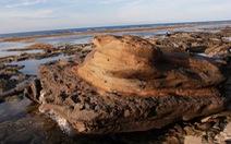 Phát hiện hóa thạch san hô độc nhất vô nhị ở Lý Sơn