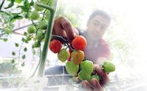 Người Sài Gòn đến Đà Lạt ngửi đất mua rau