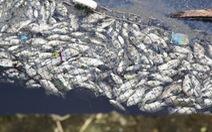 Cá chết trắng gây ô nhiễm hào thành cổ Vinh