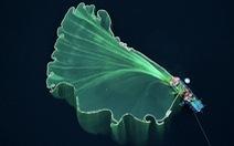 'Hoa lưới' tại Phú Yên đoạt giải nhì cuộc thi ảnh flycam quốc tế
