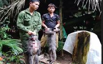 Bắt nhóm thợ săn sát hại 2 con voọc xám quý hiếm