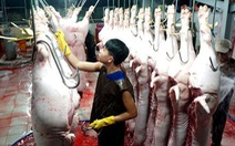 Năm 2019, TP.HCM chấm dứt giết mổ gia súc, gia cầm thủ công