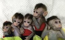 Trung Quốc nhân bản khỉ chỉnh sửa gen