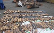 Hơn 7 tấn ngà voi, vảy tê tê trá hình là nhựa đường từ châu Phi cập cảng Hải Phòng