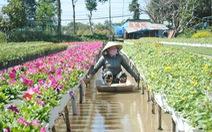 Thăng trầm làng hoa Sa Đéc - Kỳ 1: Từ quá khứ đến hiện tại