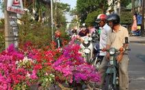 Hoa tết đổ về TP.HCM, nhà vườn mong người thành phố vui vẻ mua sớm