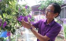 Thăng trầm làng hoa Sa Đéc - Kỳ 4: Tình yêu màu tím