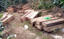 Vụ phá rừng Krông Pha là 'thu gom'?