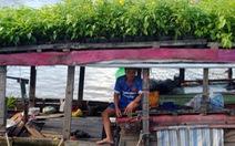 Thăng trầm làng hoa Sa Đéc - Kỳ 7: Thương hồ làng hoa