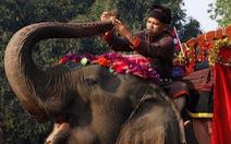Bất ngờ khi Lào, đất nước 'triệu voi' chỉ còn chưa tới 1.000 voi
