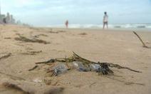 Sứa độc tấn công bờ biển Úc, hơn chục ngàn người bị đốt