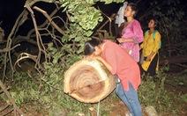Tòa cho phép chặt cây để mở tuyến metro, người dân ôm cây khóc