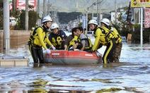 Hai thủy thủ Việt trên tàu bị chìm do bão Hagibis, một người được cứu sống
