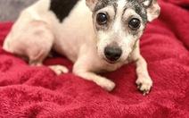 12 năm trời đi lạc, cô chó cưng được tìm thấy cách nhà 1.800km