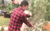 Video: Phát hiện hộ dân trồng cần sa ở TP  Đà Lạt