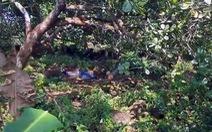 Dẫn khách coi đất bỗng chết trong vườn điều, nghi bị rắn cắn