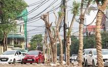 TP Vinh thay hơn 300 cây xanh làm phố đi bộ, dân tiếc nuối