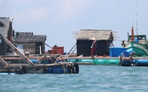 Cá chết hàng loạt nghi do ô nhiễm, dân thiệt hại tiền tỉ