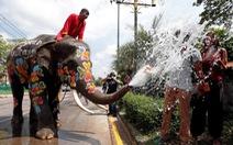 Góc tối đáng sợ của các trại voi 'mọc như nấm' ở Thái Lan