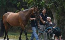 Dùng ngựa chữa bệnh, dân Singapore đang thích