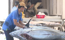 Giá tôm đang tăng trở lại, cá ngừ tiếp tục rớt giá