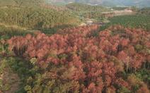 Video: Kỷ luật cán bộ huyện Lâm Hà vì liên quan đến vụ đầu độc rừng thông