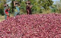 Giá hành củ thế giới tăng vọt sau lệnh cấm xuất khẩu của Ấn Độ