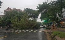 Miền Trung cây xanh ngã đổ la liệt do ảnh hưởng bão