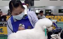 Cô gái Việt giỏi cắt tỉa làm đẹp cún cưng chinh phục giám khảo Đài Loan