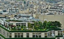 Ai Cập: 'Phủ xanh' các tòa nhà để cải thiện chất lượng không khí