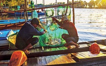 Thương nhớ những mùa cá linh - Kỳ 4: Tìm nguồn cá linh khác