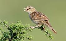 Học gì từ 'Chuyện kể về trăm loài chim'