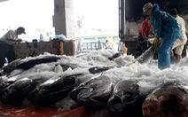Hàng trăm tấn cá ồ ạt cập cảng Quy Nhơn sau bão số 6