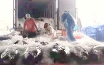 Video: Ngư dân trúng hàng trăm tấn cá sau bão số 6 tại Bình Định