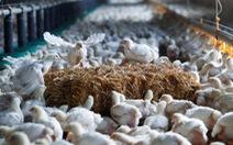 Trung Quốc bỏ rào cản nhập khẩu gia cầm của Mỹ 'ngay tức khắc'