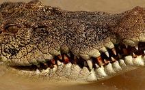 Bị cá sấu 2,8m lao vô ngoạm, chọc mù mắt thoát chết