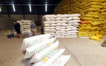 Xuất khẩu gạo phải thận trọng, tuyệt đối không để trong nước thiếu gạo