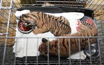 Công an Hà Tĩnh giải cứu 2 con hổ con