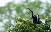 Đồng Nai đề nghị Bình Dương cùng bảo vệ đàn chim cổ rắn quý hiếm