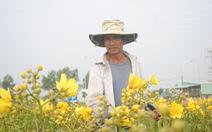 Thí điểm thu phí khách tham quan làng hoa Sa Đéc