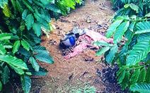 Bắt thầu xây dựng giết người tình bỏ xác ngoài vườn cà phê