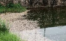 Hàng tấn cá chết trắng hồ ở Quảng Trị