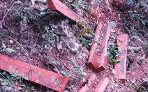 Nguyên trạm trưởng kiểm lâm bị bắt tạm giam vì rừng Phong Nha mất gỗ quý
