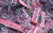 'Chưa phát hiện nạn phá rừng tại Kon Tum' như báo chí phản ánh