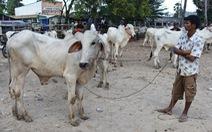 Dịch tả heo chưa lắng, bò lở mồm long móng lan nhanh