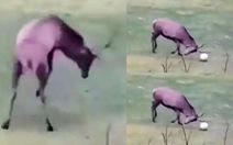 Video cựu danh thủ Gary Lineker chia sẻ con nai đi bóng và ghi bàn hút 10 triệu lượt xem