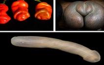 Những sinh vật có hình dáng khiến người xem 'đỏ mặt'